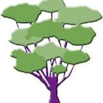 Средства TEBODONT и масло чайного дерева