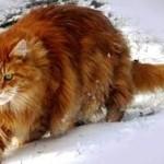 Лучшее питания для кошек Optimeal – Ваш любимец оценит это