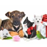 Где купить товары для животных?
