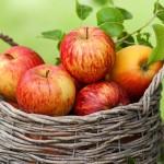 Правильные яблоки — залог пользы для организма.