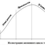 Этапы жизненного цикла товара.