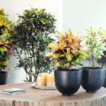 Как правильно выбрать домашнее растение.