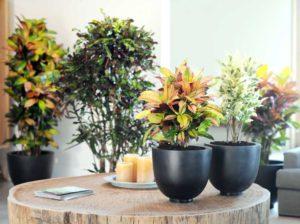 выбрать домашнее растение
